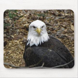Eagle calvo alfombrillas de ratón