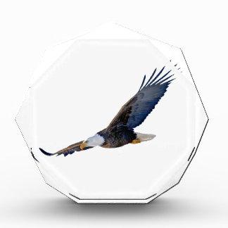 Eagle calvo altísimo
