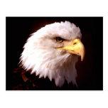 Eagle calvo American Eagle Postales