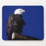 Eagle calvo americano alfombrillas de ratón