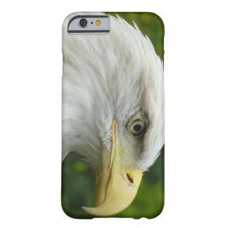 Eagle calvo americano funda de iPhone 6 slim