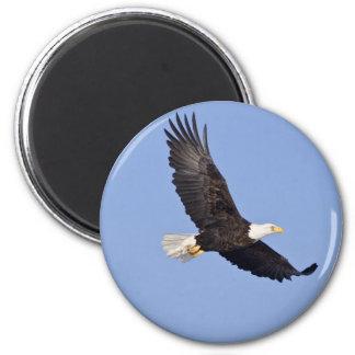 Eagle calvo americano imán de frigorifico