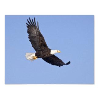 "Eagle calvo americano invitación 4.25"" x 5.5"""