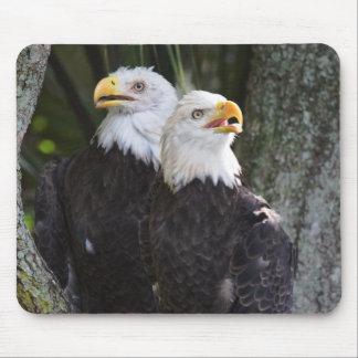 Eagle calvo americano Mousepad Tapete De Ratones