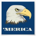 Eagle calvo americano para Merica
