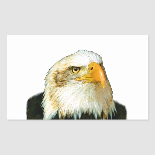 Eagle calvo americano pegatina rectangular