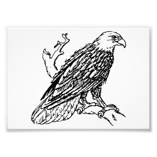 Eagle calvo americano cojinete