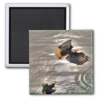 Eagle calvo americano que vuela sobre el océano imán cuadrado