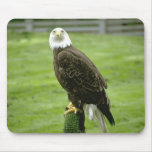 Eagle calvo americano tapete de ratones