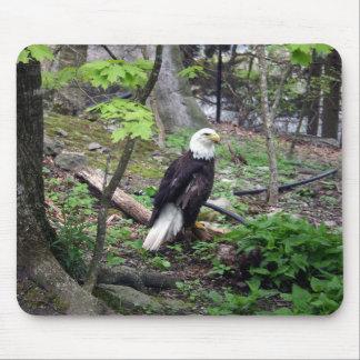 Eagle calvo americano tapetes de ratones