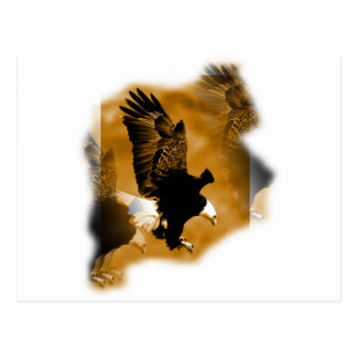 Eagle calvo americano postales