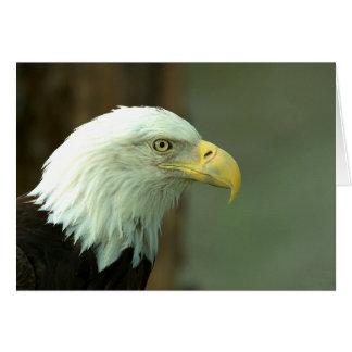 Eagle calvo americano tarjetas