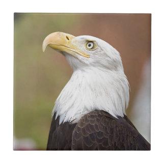 Eagle calvo azulejo cuadrado pequeño