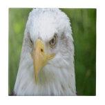Eagle calvo azulejo
