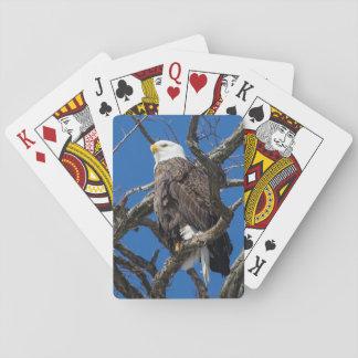 Eagle calvo barajas de cartas