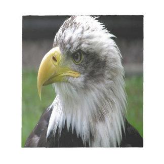 Eagle calvo blocs de papel