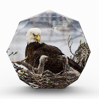 Eagle calvo con eaglets