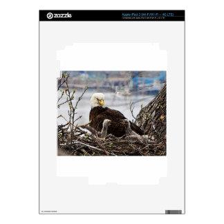 Eagle calvo con eaglets pegatina skin para iPad 3