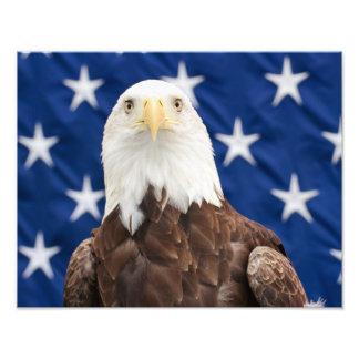 Eagle calvo con las estrellas cojinete