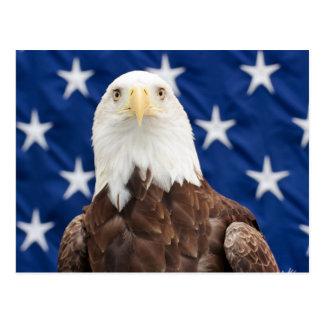 Eagle calvo con las estrellas postal