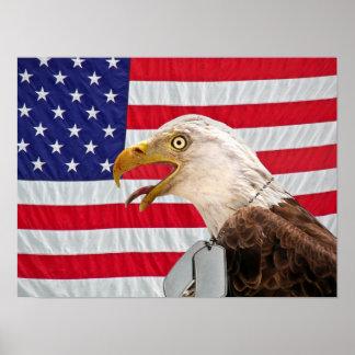 Eagle calvo con las placas de identificación póster