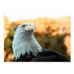 Eagle calvo contra las hojas de otoño postal