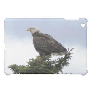 Eagle calvo de Alaska Ipad