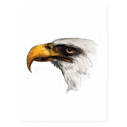 Eagle calvo de cabeza blanca postal