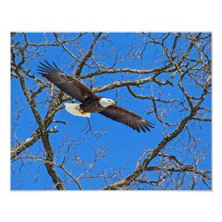 Eagle calvo en azul fotografías