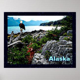 Eagle calvo en la costa de Alaska Póster