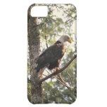 Eagle calvo en un árbol