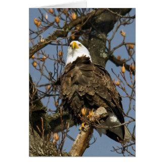 Eagle calvo en una alta perca tarjeta de felicitación