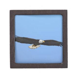 Eagle calvo en vuelo, home run, Alaska, Haliaetus Cajas De Recuerdo De Calidad