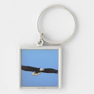 Eagle calvo en vuelo, home run, Alaska, Haliaetus Llavero Cuadrado Plateado
