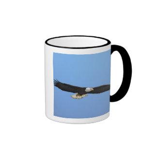 Eagle calvo en vuelo, home run, Alaska, Haliaetus Taza De Dos Colores