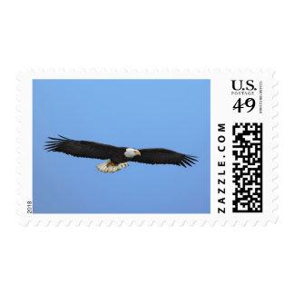 Eagle calvo en vuelo, home run, Alaska, Haliaetus Timbre Postal