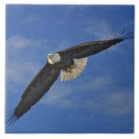 Eagle calvo en vuelo, leucocephalus de Haliaetus, Azulejo Cuadrado Grande