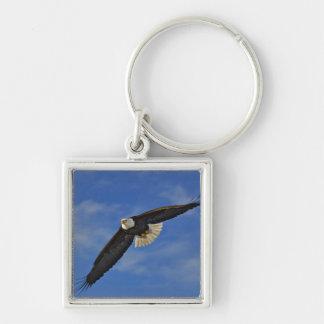 Eagle calvo en vuelo, leucocephalus de Haliaetus, Llavero Cuadrado Plateado