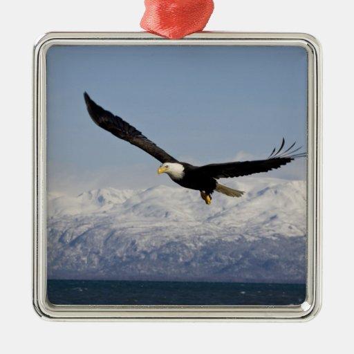 Eagle calvo en vuelo, leucocephalus del adorno navideño cuadrado de metal