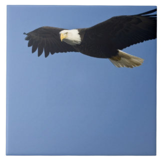 Eagle calvo en vuelo, leucocephalus del Haliaeetus Teja Cerámica