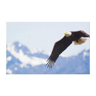Eagle calvo en vuelo, montañas olímpicas impresión en lienzo