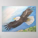 Eagle calvo en vuelo poster