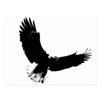 Eagle calvo en vuelo postales