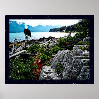 Eagle calvo encaramado en la costa de Alaska Posters