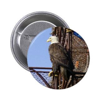 Eagle calvo encaramado en los potes de cangrejo pin