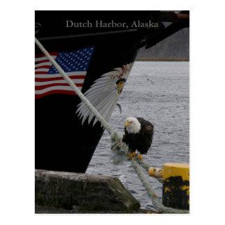 Eagle calvo encaramado en una línea de amarre pue tarjetas postales