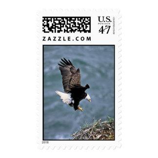 Eagle calvo estampilla