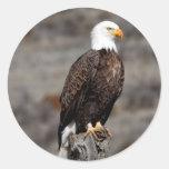 Eagle calvo etiquetas redondas