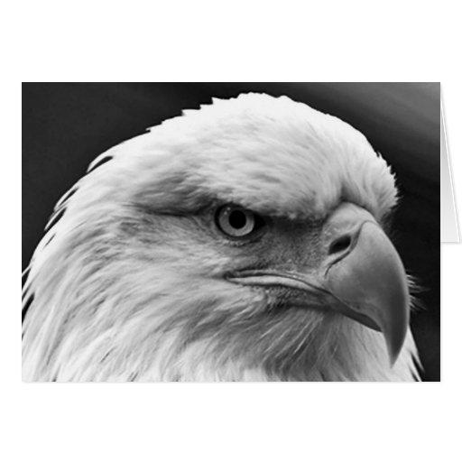 Eagle calvo felicitación