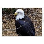 Eagle calvo felicitaciones